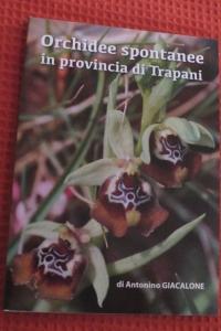 ORCHIDEE SPONTANEE IN PROVINCIA DI TRAPANI